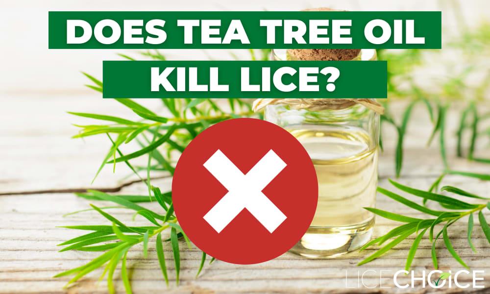 will tea tree oil kill lice