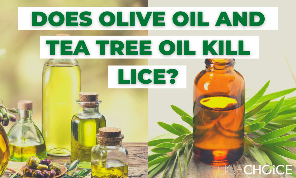 olive oil for lice and tea tree oil for lice