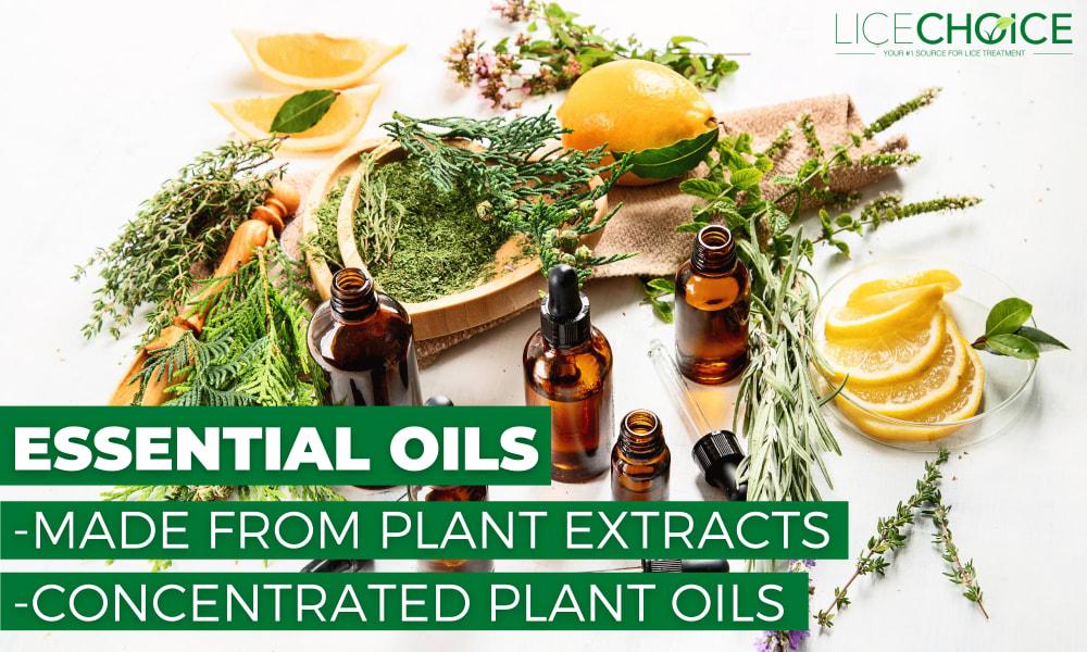 lice essential oils