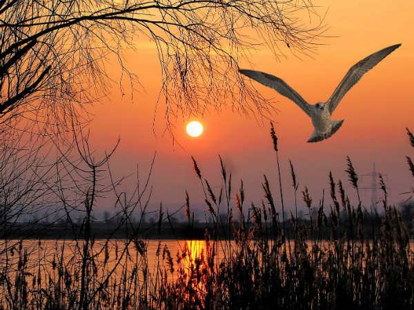 कावर झील पक्षी विहार'