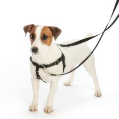 Freedom No-Pull Dog Harness ONLY - Black & Silver + other special colours
