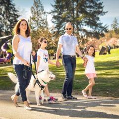 RC Pets Tempo No Pull Dog Harness