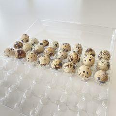 MDC - Fresh Quail Eggs 24 ct (30% more)