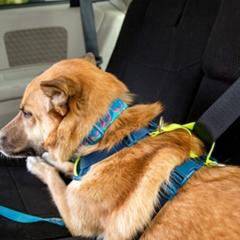 RC Pets Moto Control Dog Car Harness