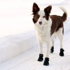 RC Pet Canine Equipment Ultimate Trail Dog Boots