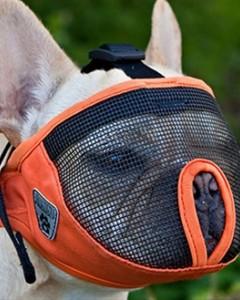 Canine Friendly - Short Snout Muzzle -