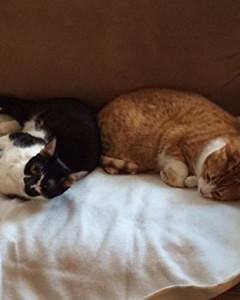 Achy Paws - Self-Warming Pet Mat