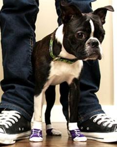 RC Pets - Pawks Socks -