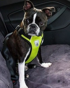 Canine Friendly - Vented Vest Harness V2 -