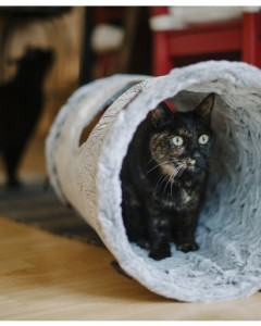 PLAY - Savannah Cat Tunnel
