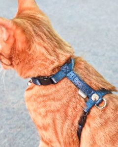 ppark - i-Series Cat Harness