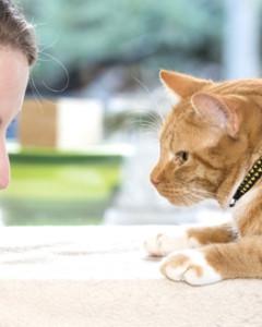 RC Pets - Cat Collar -