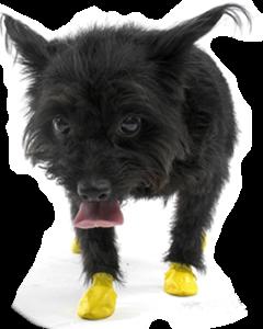 Pawz - Dog Boots Shoes -