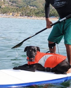 Canine Friendly - Canine Life Jacket -