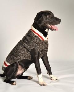 Chilly Dog - Boyfriend Sweater