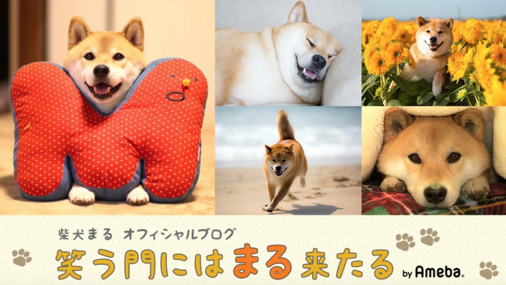 日本動物界「發哥」-柴犬まる!