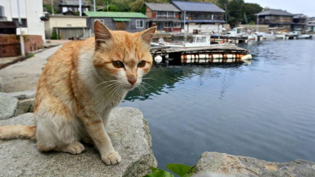 【遊記】日本.愛媛.貓島