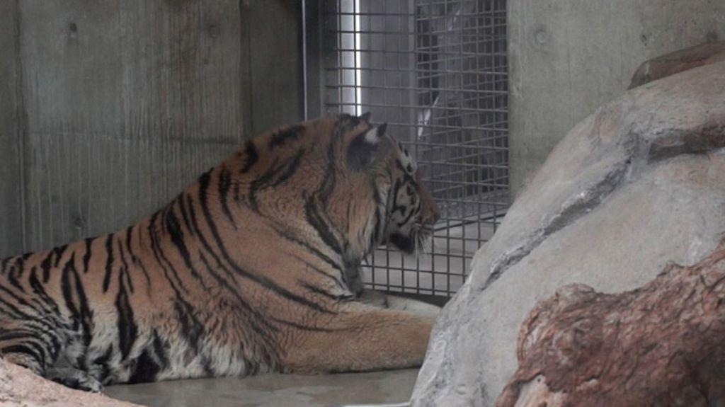 【大阪旅遊】大阪周遊卡免費景點推介5-大阪動物園