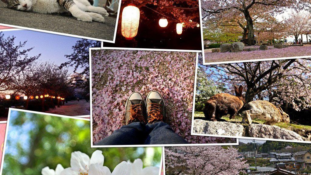 中国四国(瀨戶內海)賞櫻場所