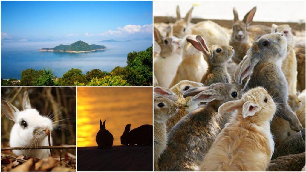 西日本暴雨之後 廣島「兔島」現況