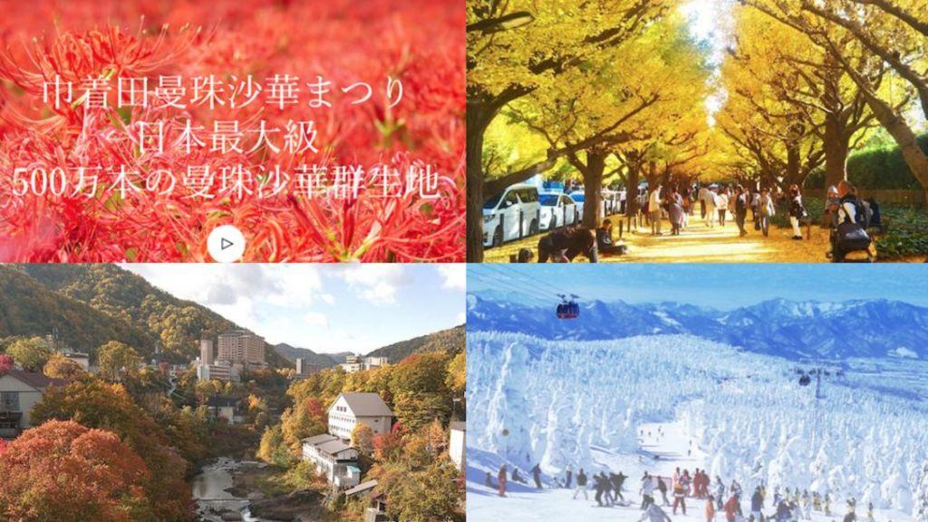 [秋冬觀光] 日本10月-3月觀光活動特集(掃帚草,彼岸花,紅葉,銀杏,樹冰)