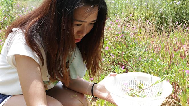 【石垣遊】自己的菜自己煮・初嚐農家風味