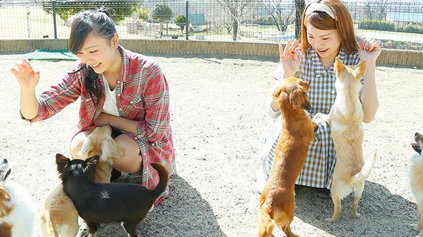 650日圓近距離接觸逾百狗狗 治癒心靈的「世界名犬牧場」
