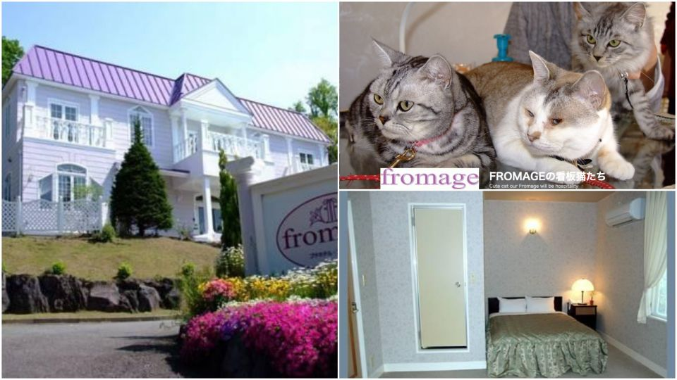 服務評分滿分!日本靜岡能夠與貓貓同住的酒店