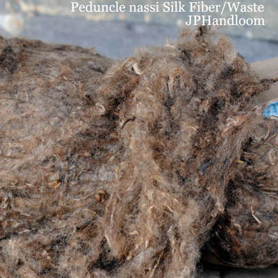 Peduncle Nassi Silk Fiber
