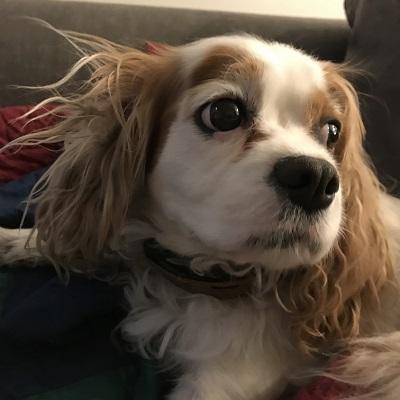 Teagan, the service dog