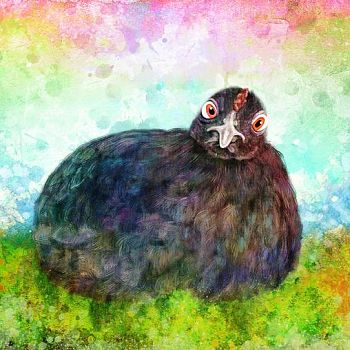 Pencil - Digital Painting of Hen