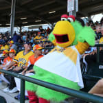 Pirate's mascot Parrot sitting in stadium
