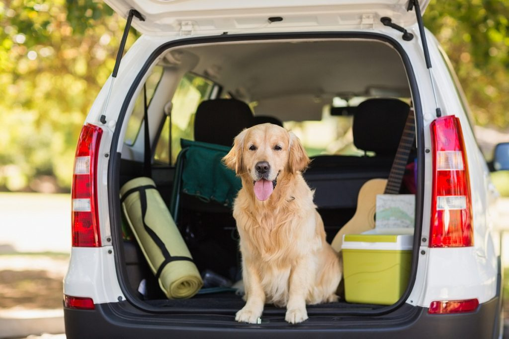 How to travel with your pet in France?