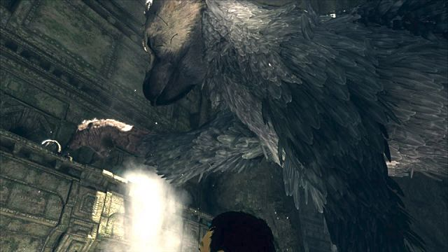 tlg-trico-hungry-59580.png