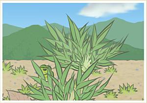 Frog behind plant in desert