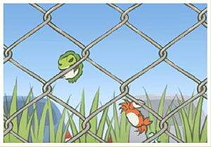 Frog climbing fence