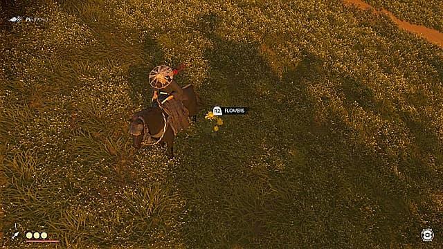 Jin picking flowers in a field. Flowers are currency for dye merchants.
