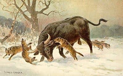 long-horned-european-wild-113c6.jpg