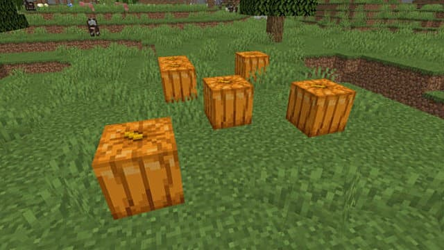 A batch of pumpkins in a grassy biome with a cow in the background.