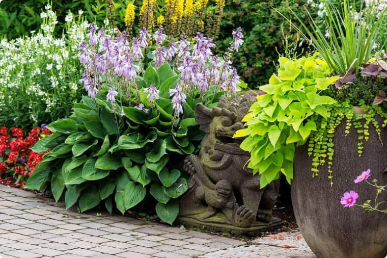 Сирень, жасмин и хоста у садовой дорожки