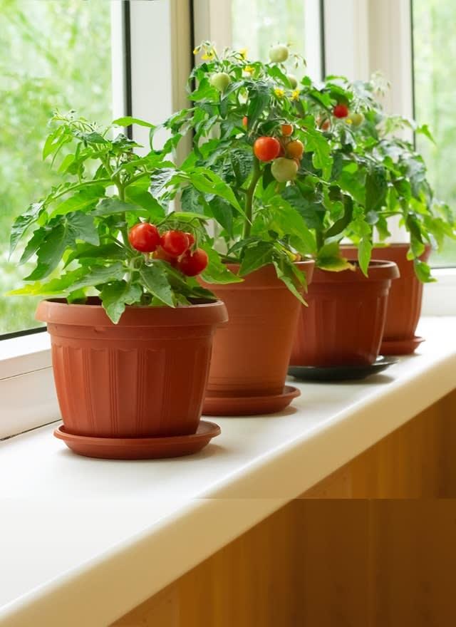 Соберите урожай на подоконнике
