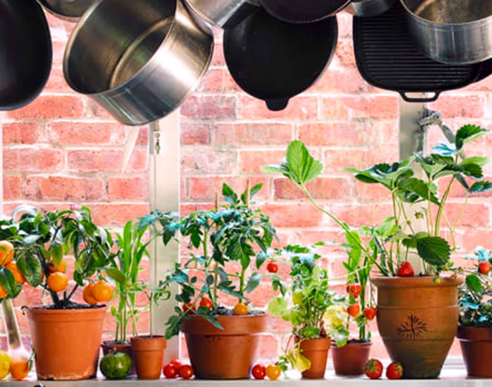 Как организовать мини-сад на кухне?
