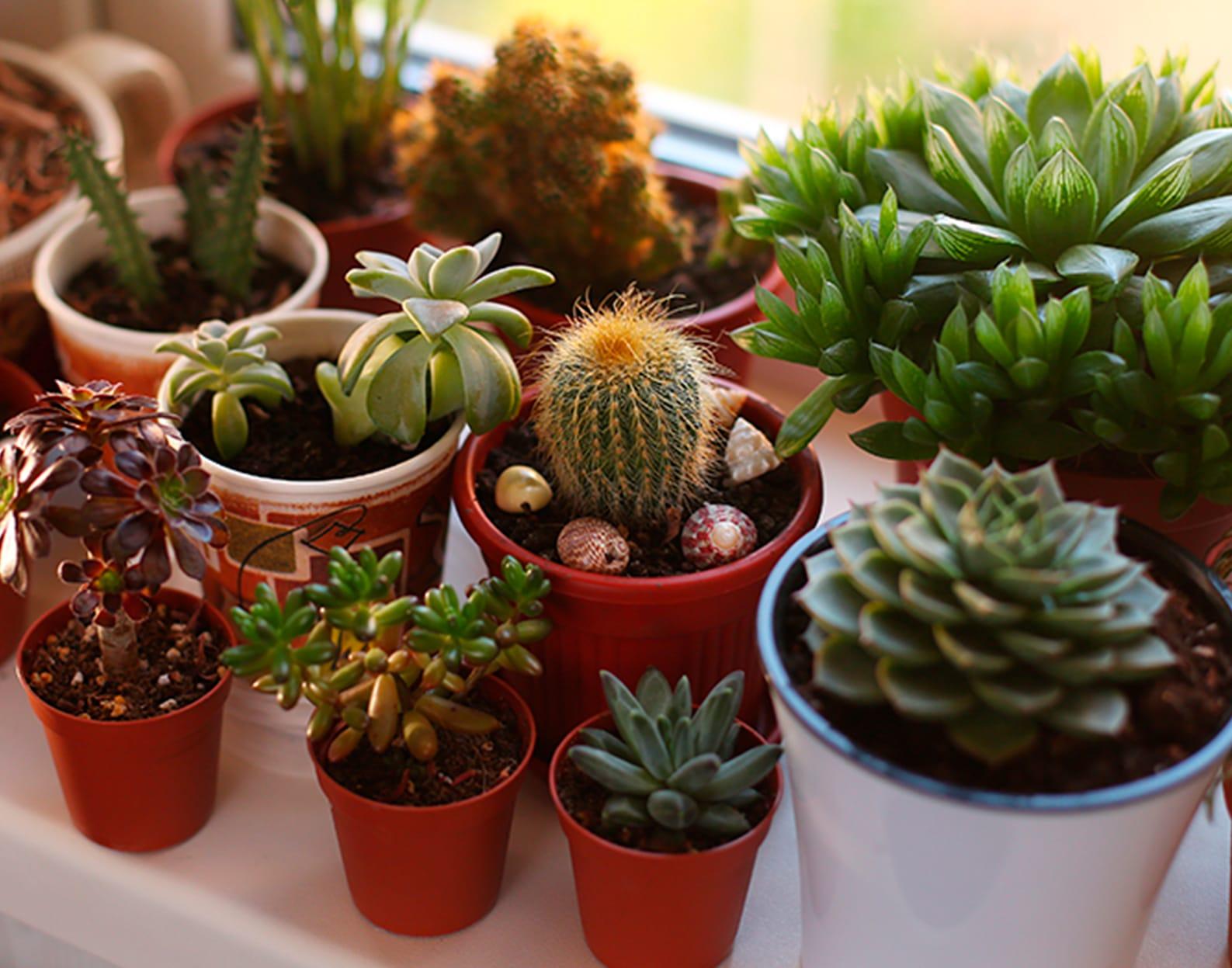Пять способов украсить окно с помощью комнатных растений