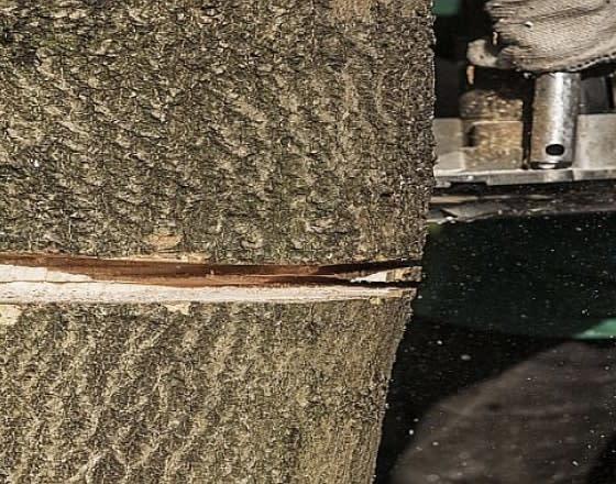 Как обрезать ветки или спилить дерево