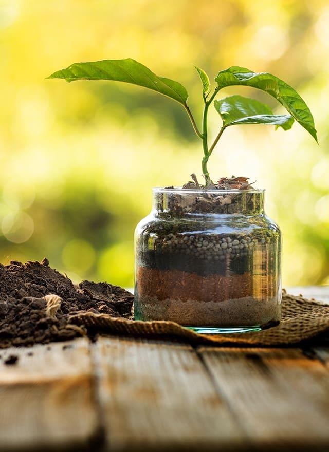 С заботой о растениях