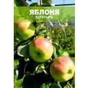 Яблоня Богатырь, 1-2 года
