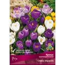 Крокусы крупноцветковые смесь окрасок размер луковицы 8/9, 10 шт.