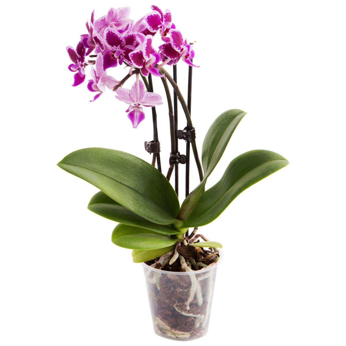 орхидея парфюм тула каталог товаров цены