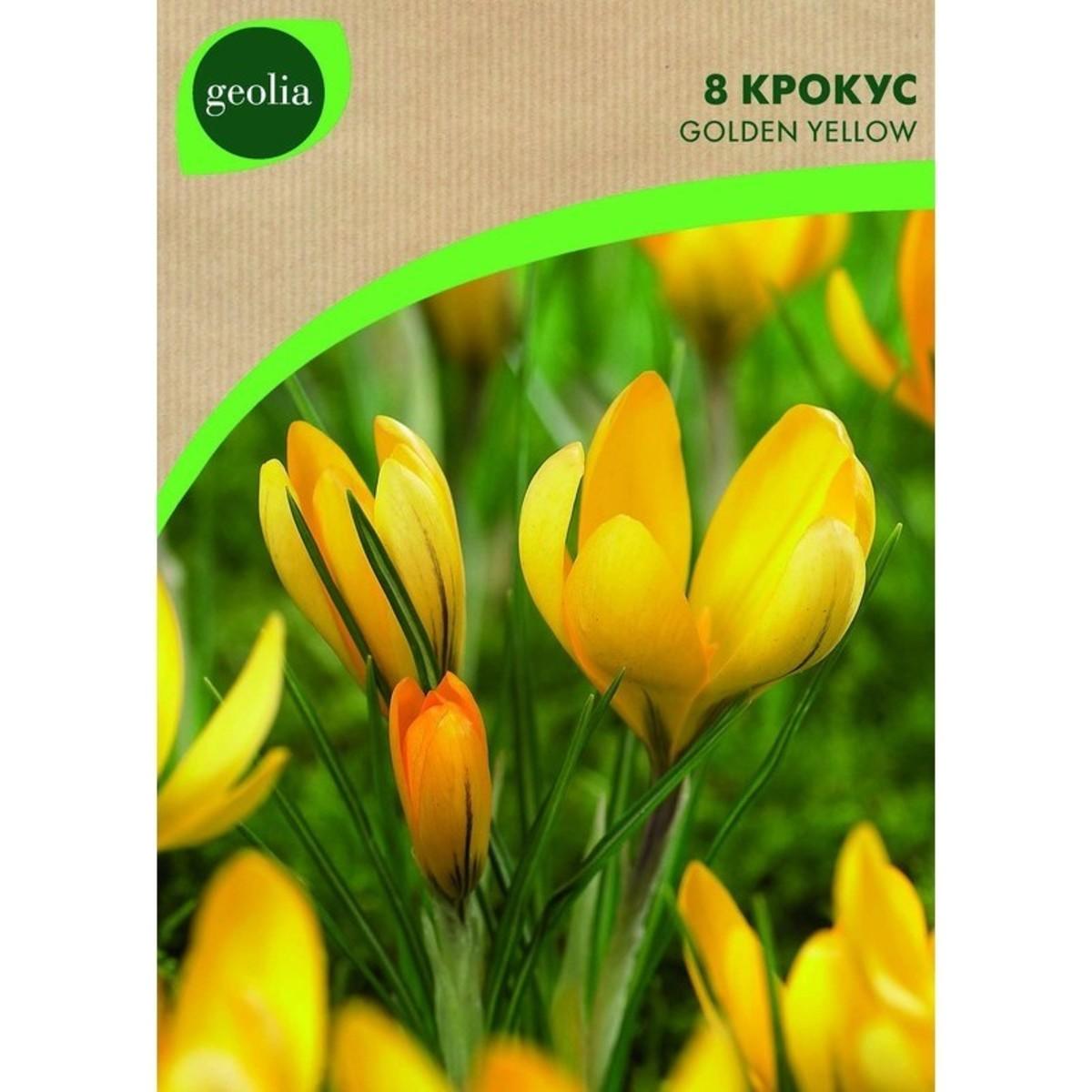 Крокус Geolia Yellow