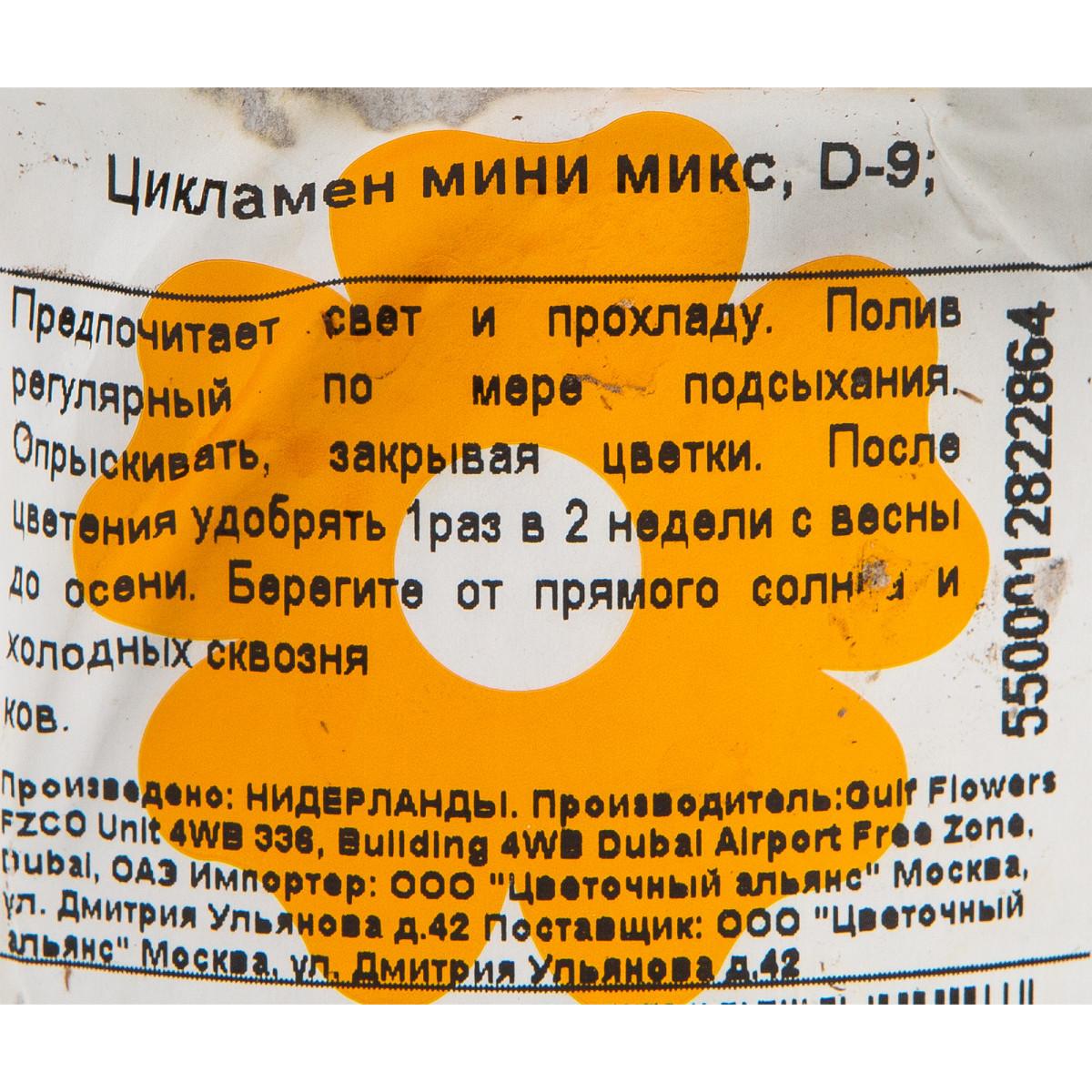 Цикламен Мини Микс 105Х15